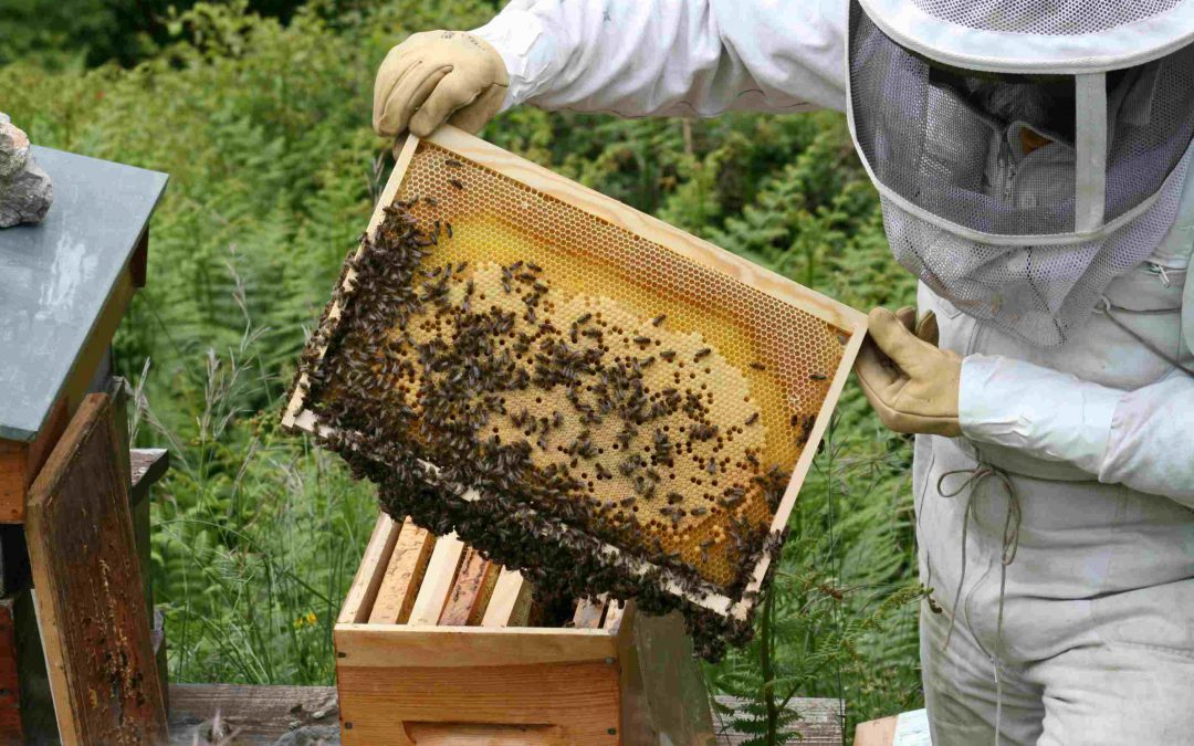 Apiculture perfectionnement