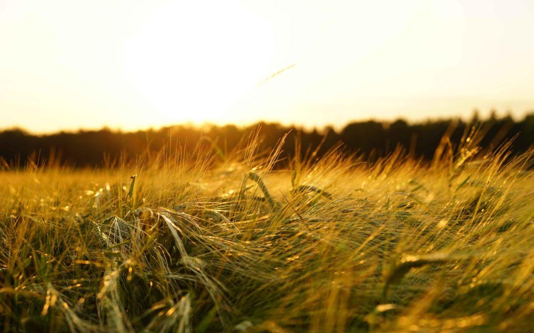 Une agriculture paysanne pour une souveraineté alimentaire
