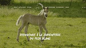 La Jumenterie du Pech Blanc à Théminettes dans le Lot