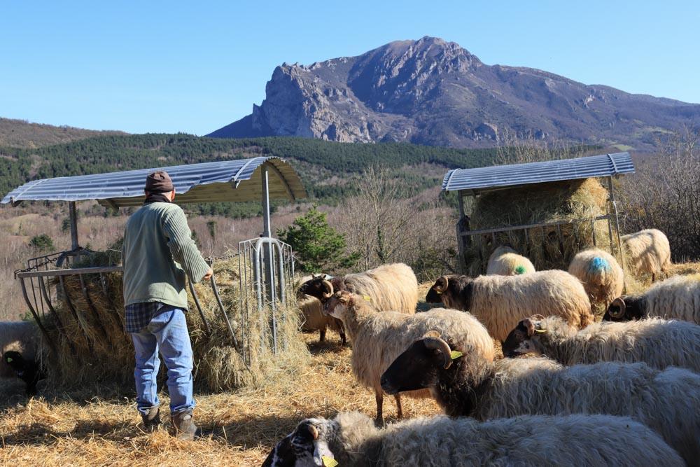 Un élevage de brebis laitière situé à Saint-Louis-et-Parahou, dans l'Aude à la ferme de la Borde Jean-Marie.
